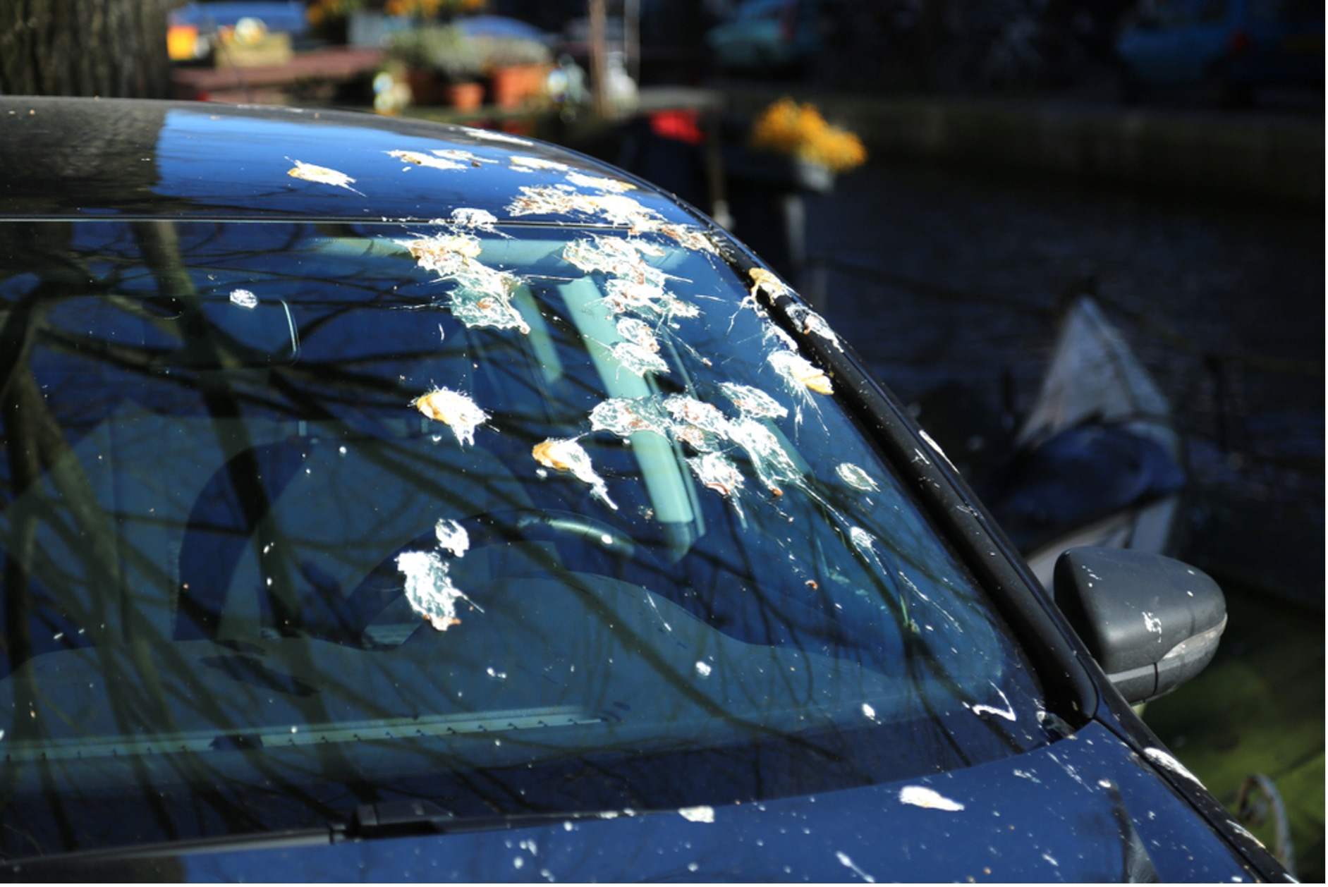 Things that will damage your car paint